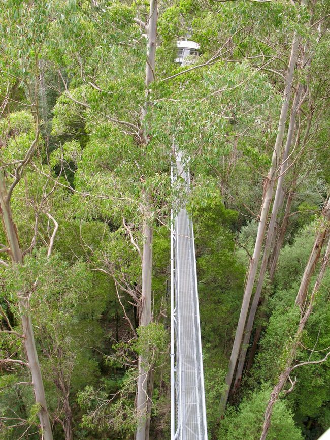 Australia Day Green Color Nature No People Outdoors Tree Top Walk