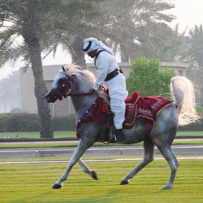 Qatarlife Qatar Corniche Doha Horses Exercising Cavalry Doha Qatar Dohalife Palm