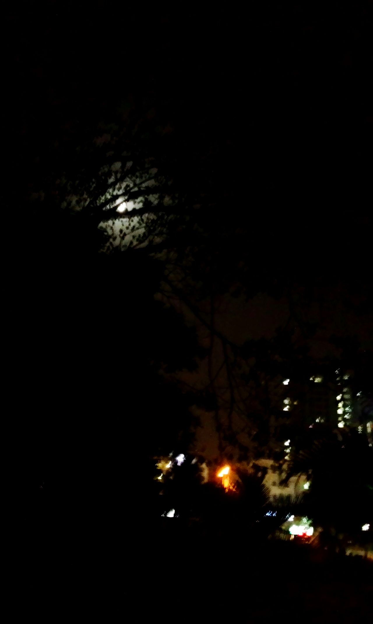 Night Photography Moon Trees Night Lights Urban Nature