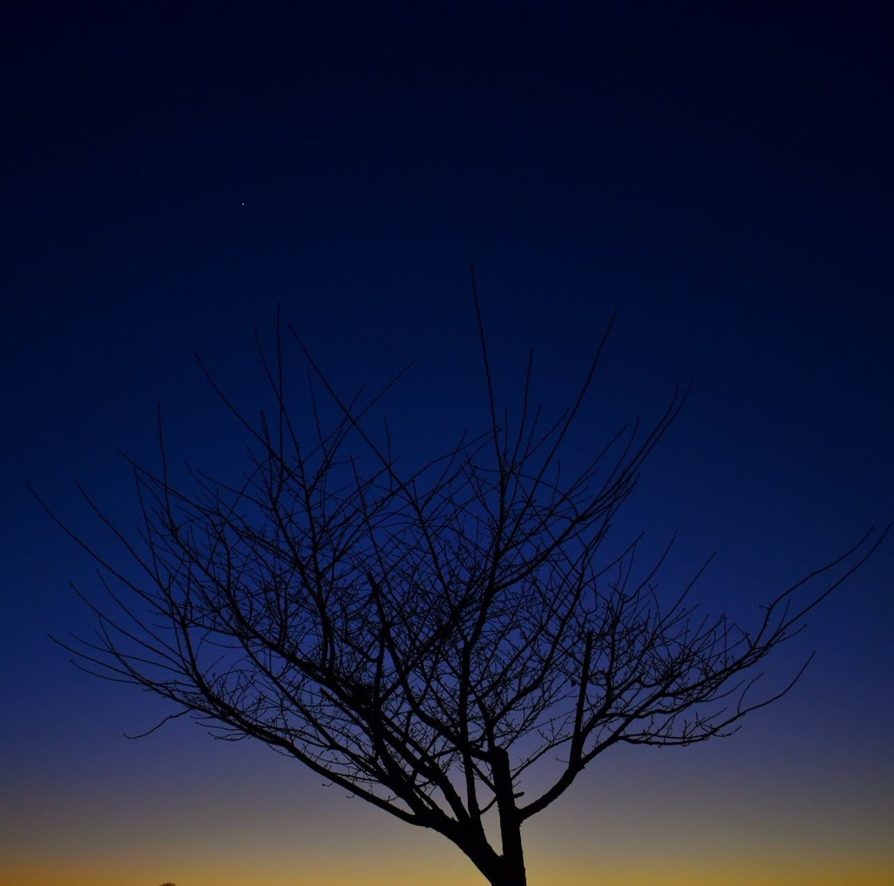 As dusk turns to night, the sky reveals her first star. Bare Tree Sky Nature Starry Night Beauty In Nature Dusk Sky Sunset EyeEmNewHere