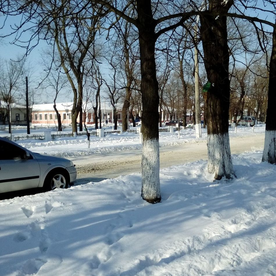Snow Winter Weather Tree Nature Day Snowing Ukraine Cold Temperature Ismail Izmail City Winter Snow❄⛄