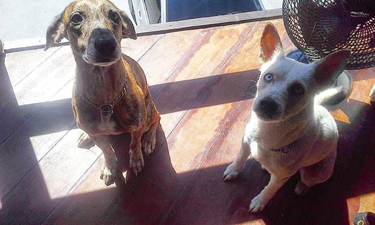 🌞 Sol= Banho 🚿 Dogs Dogsofinstagram Wash Ilovemydogs Rascue Pets
