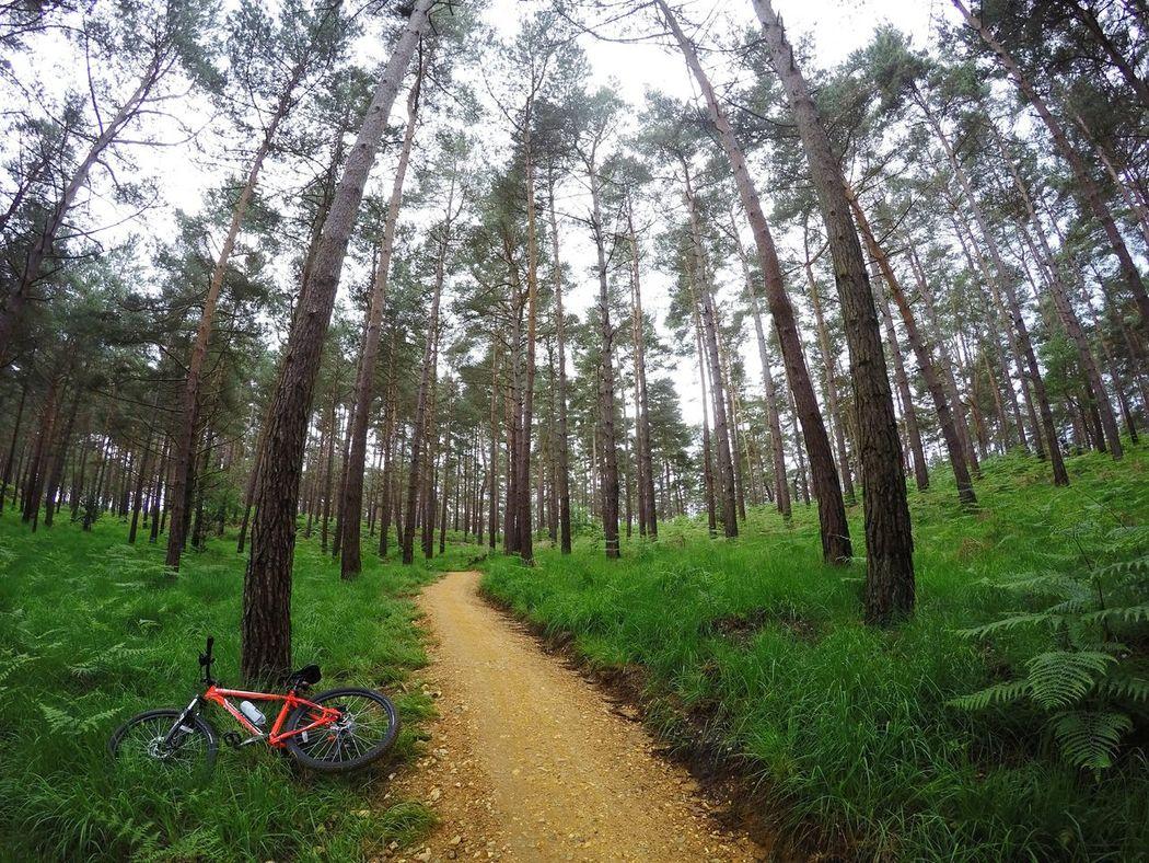 orange in green. 🚴💙 Bike Bike Love Biker Boy Nature Nature Photography Nature_collection Swinley United Kingdom