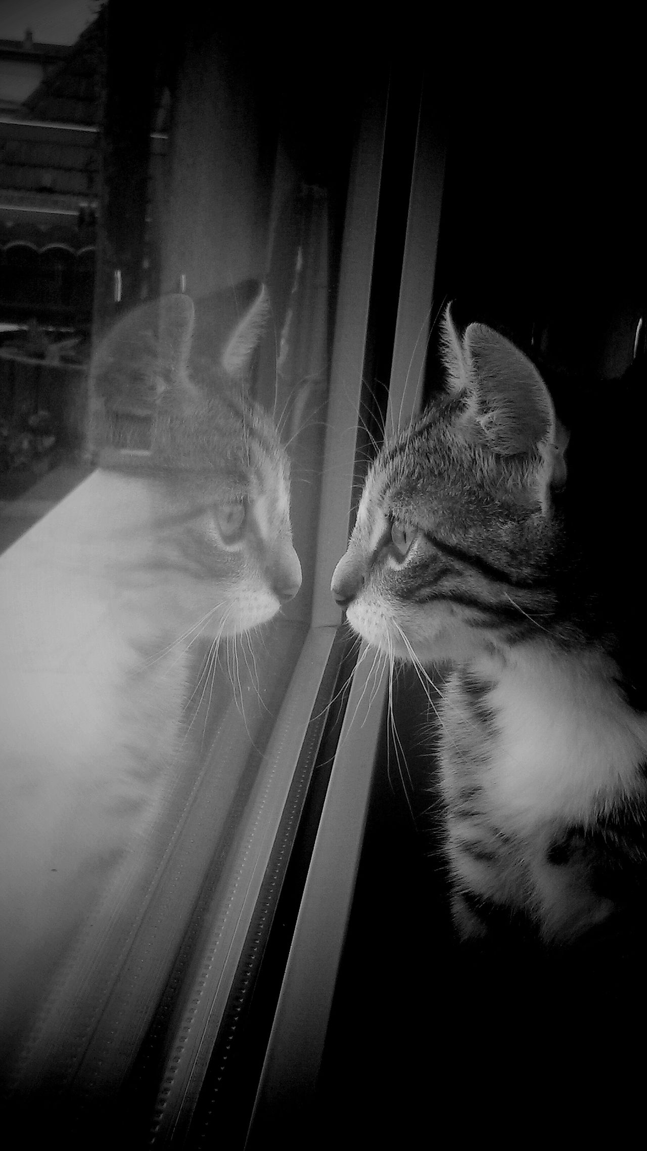 Cat Refelection - Monochrome Photography Black And White TakeoverContrast Dramatic Angles EyeEm Gallery Showcase October Creativity Animal Cats Of EyeEm Cat My Photos Adis Art EyeEm Best Shots Berlin, Germany  Fine Art Atmospheric Reflection EyeEm Best Edits Animal Photography Animal Love Coincidedence Photography Shadow Window Reflections Capture Berlin Finding New Frontiers Adapted To The City Lieblingsteil Miles Away Uniqueness The City Light