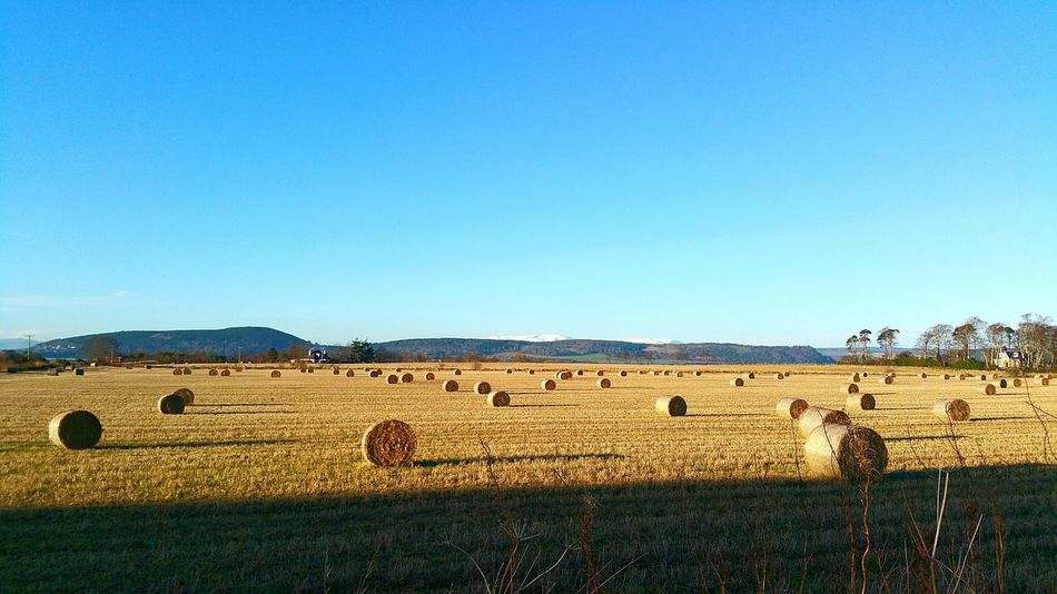 Crop  Agriculture Rural Scene Bale  Hay Field Harvesting Clear Sky Harvest Farmland No People Farm Blue Landscape Cultivated Land Scottish Scotland Outdoors Culloden