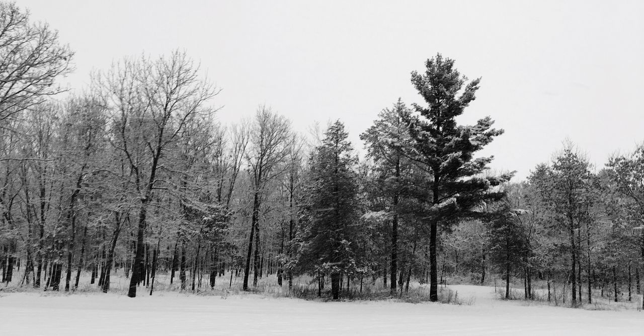 Blackandwhitephotography Black And White Photography Black And White Blackandwhite Photography Blackandwhite Black & White Pine Pine Trees Pinetree Pine Tree Pinetrees TreePorn Snow ❄ Snow Snow Trees Tree_collection  Trees Treescollection Snow Covered Cold Winter ❄⛄ Snowy Icy Ice Cold Weather Cold Temperature