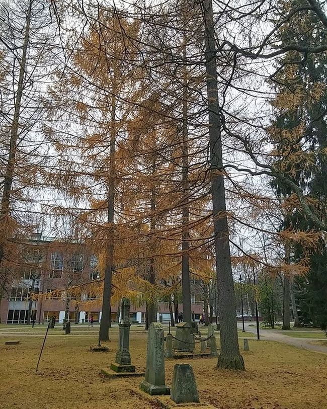 Aleksanterinkirkonpuisto Cemetery Hautausmaa Cementerio Cimetiere Tombstones Autumncolors Tampere Tamperelove Tre Visittampere Finland Visitfinland Suomi Finlandlovers