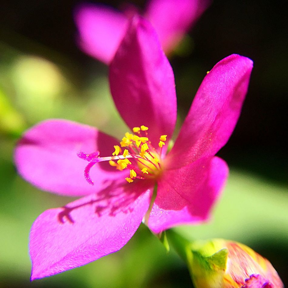 NEM Mood Flowers Flowerporn Macro_collection IPhoneography Eye4photography  EyeEm Gallery EyeEm Nature Lover Macroclique Flors