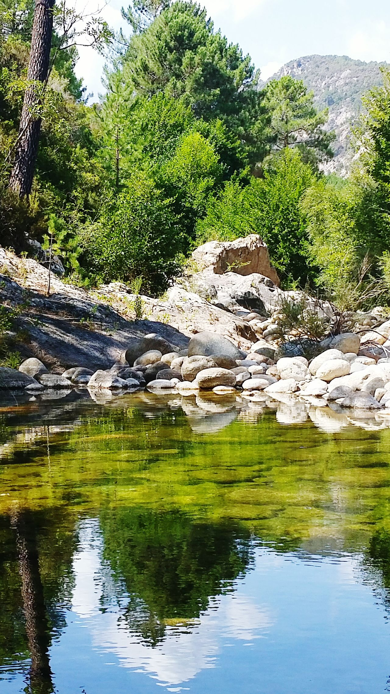 Riviere Solenzara Water Tree Nature Reflection No People Outdoors Green Color Lake Growth Beauty In Nature Plant Day Scenics Sky Landscape GetbetterwithAlex Solenzara River Corse Corsica Riviere Zen Naturelover Riverside Quietness Freedom
