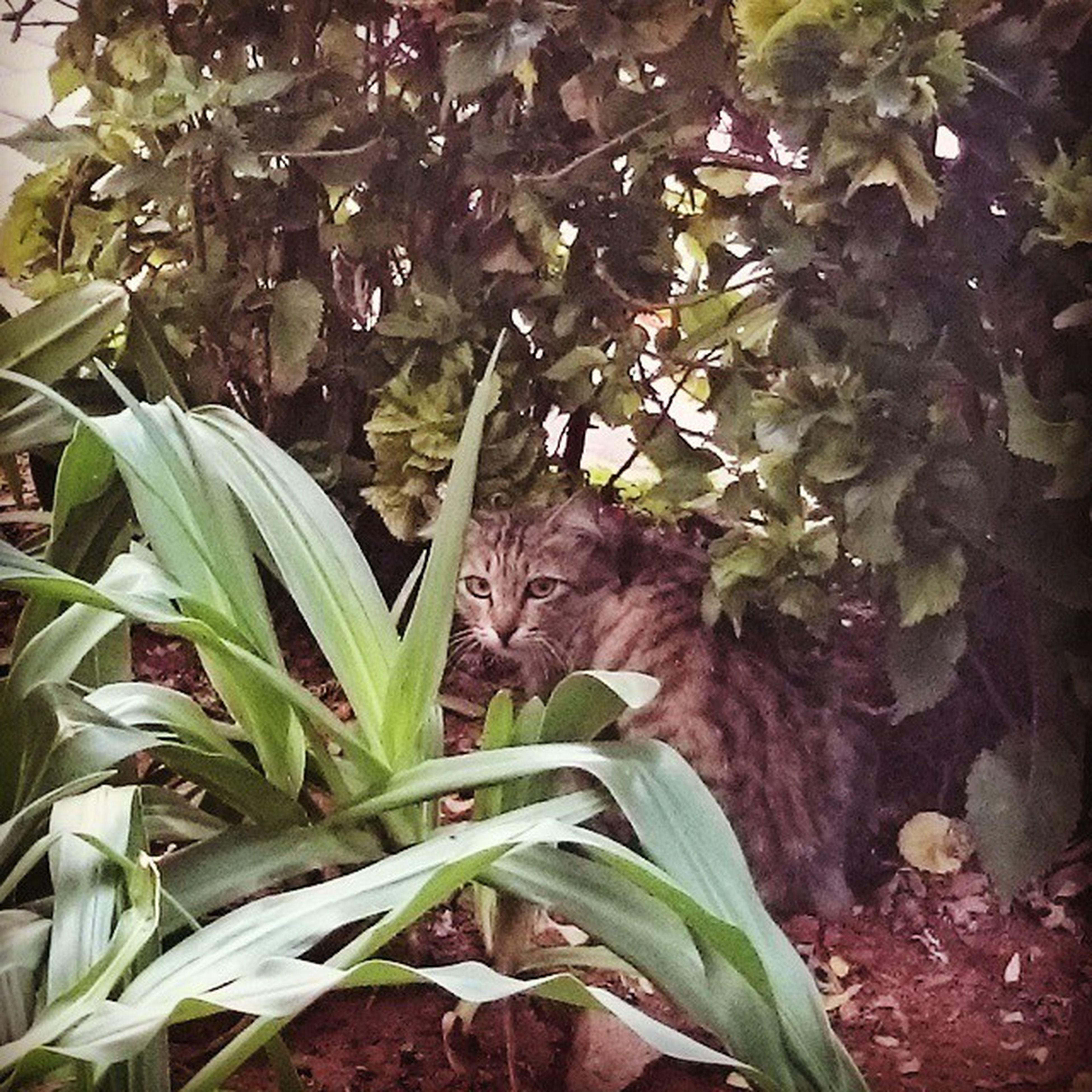 leaf, animal themes, one animal, plant, growth, green color, wildlife, mammal, nature, animals in the wild, domestic cat, pets, close-up, high angle view, day, no people, outdoors, leaves, cat, domestic animals