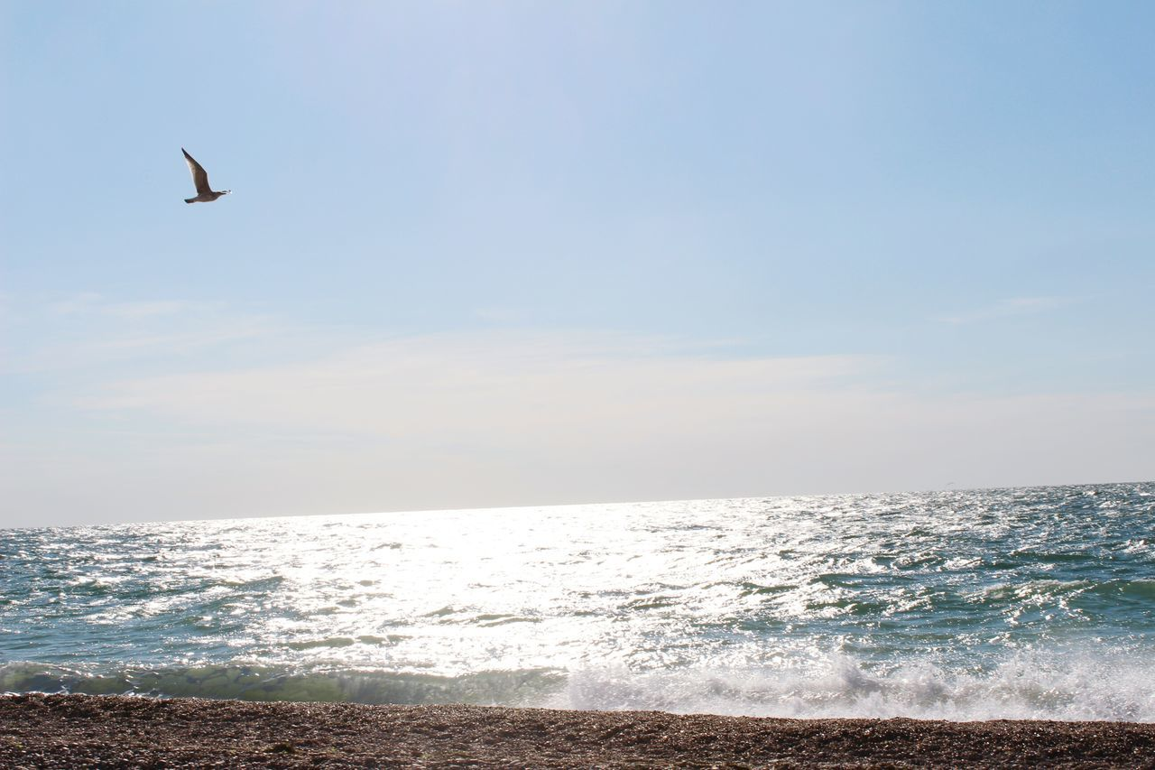 sea, horizon over water, nature, water, beauty in nature, scenics, sky, bird, tranquil scene, outdoors, tranquility, beach, no people, day, flying, wave, animal themes, spread wings