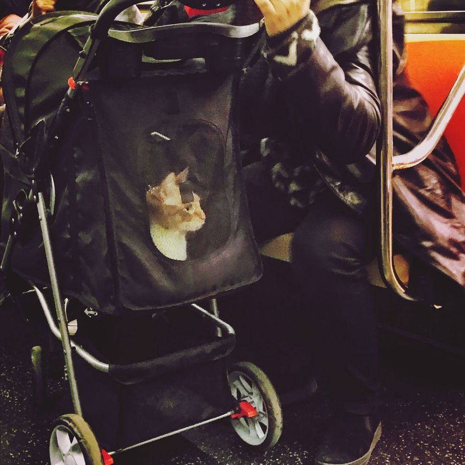 One Animal Pets Domestic Animals Baby Stroller Cat Stroller Cat NYC 1 Train