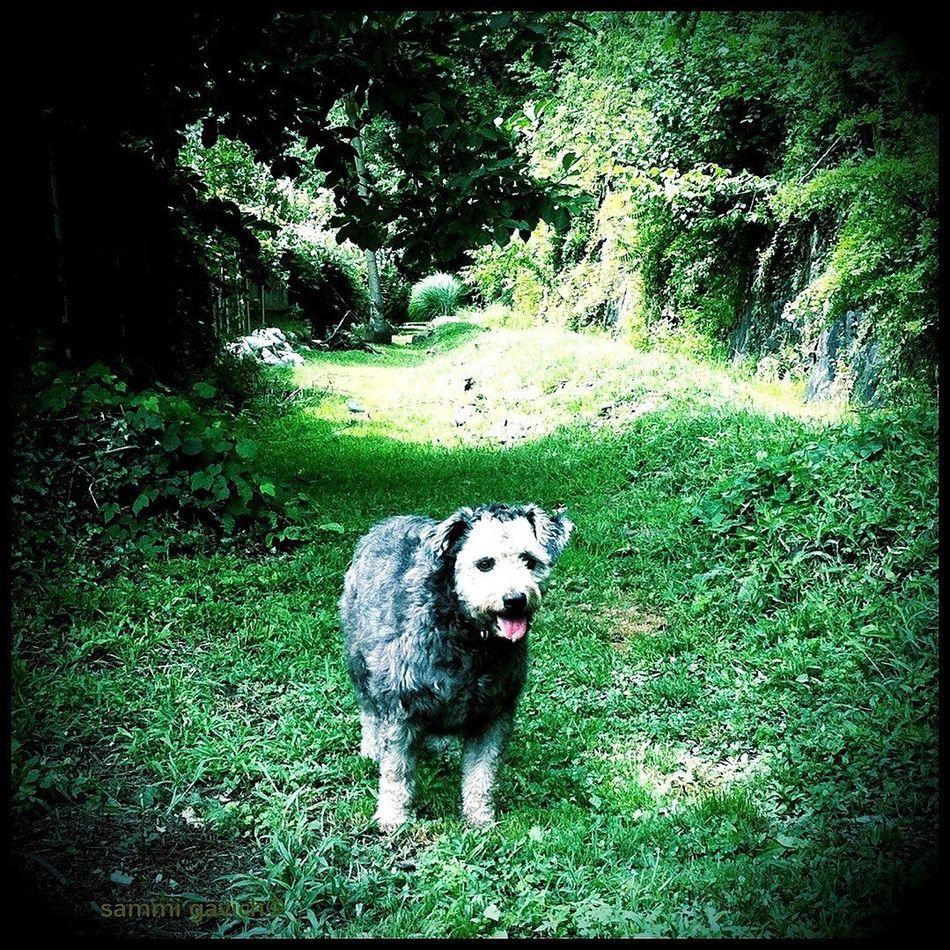 Dogs The Minimals (less Edit Juxt Photography) IPhone Camera+ AMPt_community
