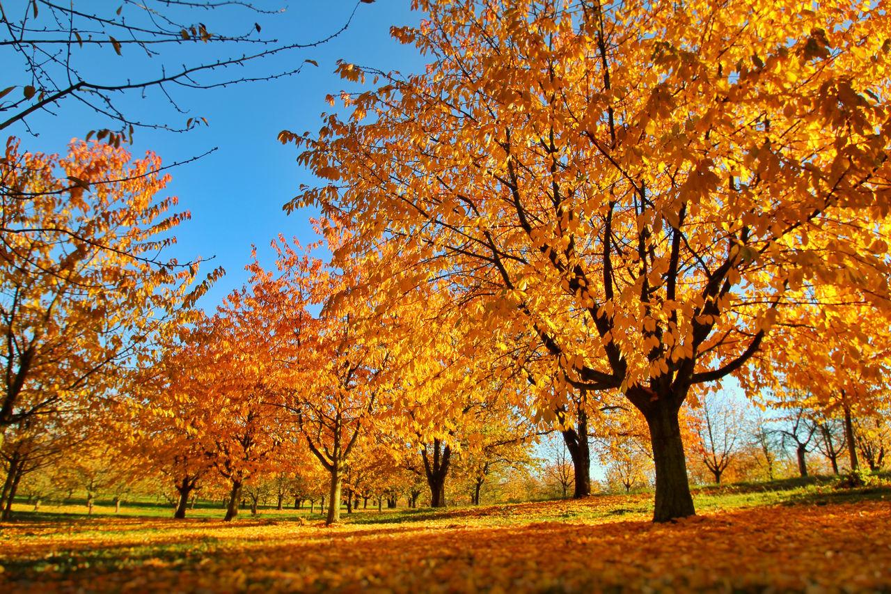Last Days of Autumn Autumn Autumn Autumn 2015 Autumn Colors Autumn Leaves Golden Leaf Golden Leaves Leaf Nature Outdoors Park Tree Trees