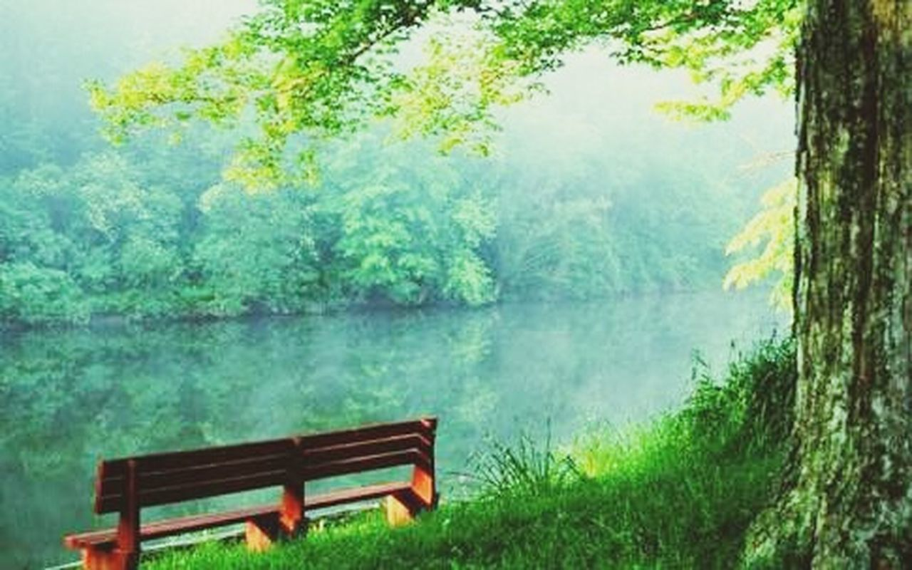 bench, tree, green color, nature, lake, absence, park - man made space, scenics, plant, tranquility, tranquil scene, wood - material, relaxation, day, beauty in nature, seat, no people, tree trunk, water, fog, landscape, growth, outdoors, grass, thick, freshness