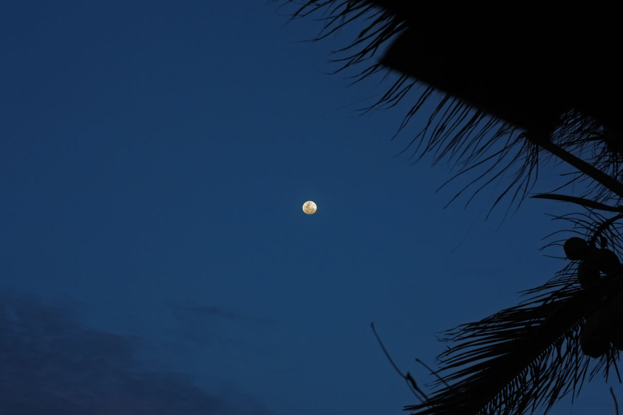 Más luna en Pipa. Natal, Brasil. Astronomy Beauty In Nature Crescent Half Moon Low Angle View Moon Nature Night Night Sky Outdoors Palm Palm Leaf Palm Tree Planetary Moon Scenics Sky Tranquility