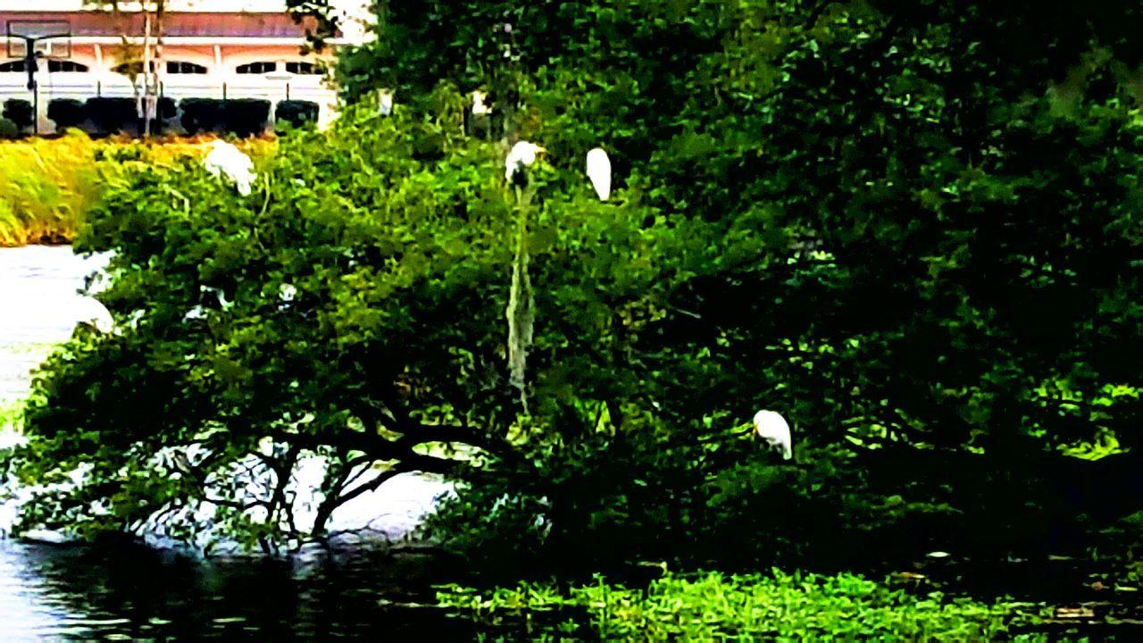 Nature Water No People Beauty In Nature Cranespotting Crane Crane Bird Cranehotel Crane Birds Cranes Craneaddicted