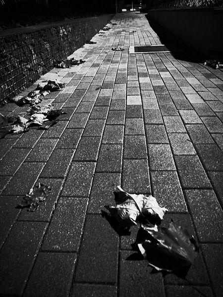 하..춥다 ㅠ Grd4 First Photo Black Photo Leaves Winter Cold Days Street Today Photo My Second Camera Ricoh GRD IV Light And Shadow Korea