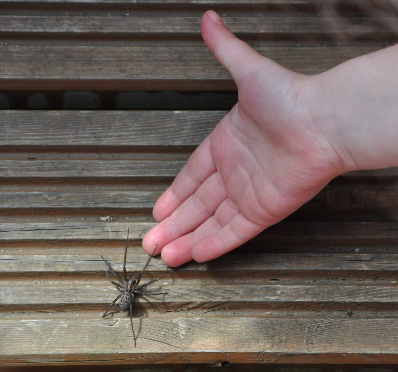 Close-up Cropped Day Detail Focus On Foreground Human Finger Lifestyles Nature Outdoors Part Of Person Plank Selective Focus Spider Spider On Hand Unrecognizable Person Wood Wood - Material Wooden
