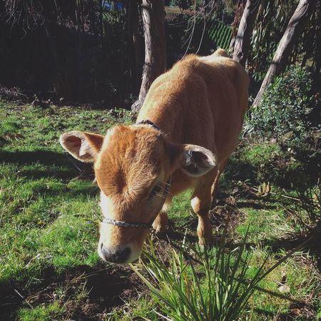 B a q u i t a 😊One Animal Animal Themes Day EyeEm Nature Lover Animal Photography