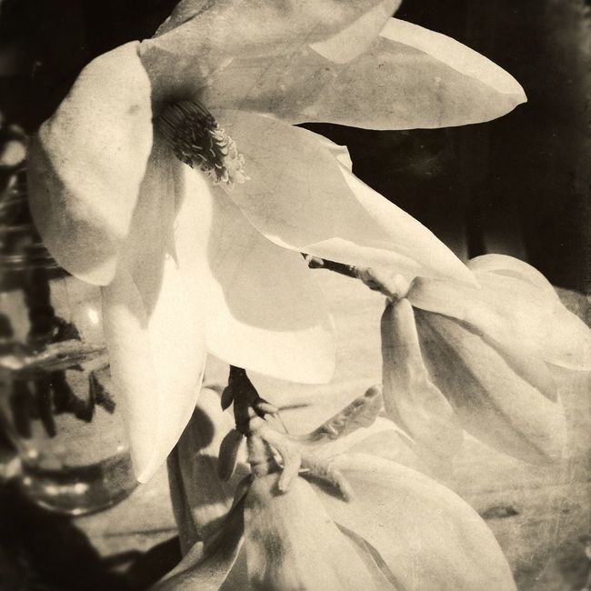 "Blackandwhite AMPt - ""Still Life"" (Nature Morte)"