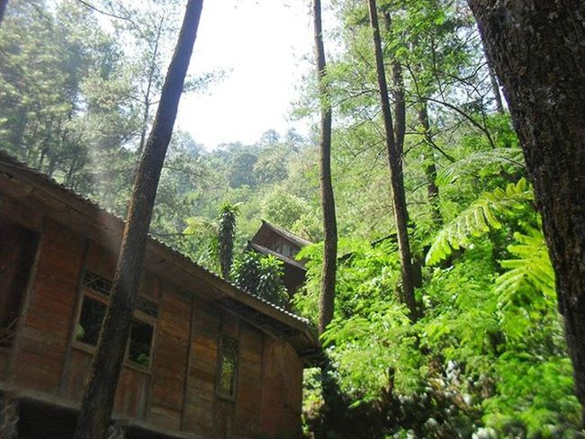House in the forest UBER @geonusantara Geo011600669 Geo0035uber Lokasi:cilember,bogor Keluarga Geonusantara Geojabodetabek --------------------- House Forest Tree Landscape Sun Light Cahaya Daun Hijau Coklat Hidup Tinggi Upram011 Peace