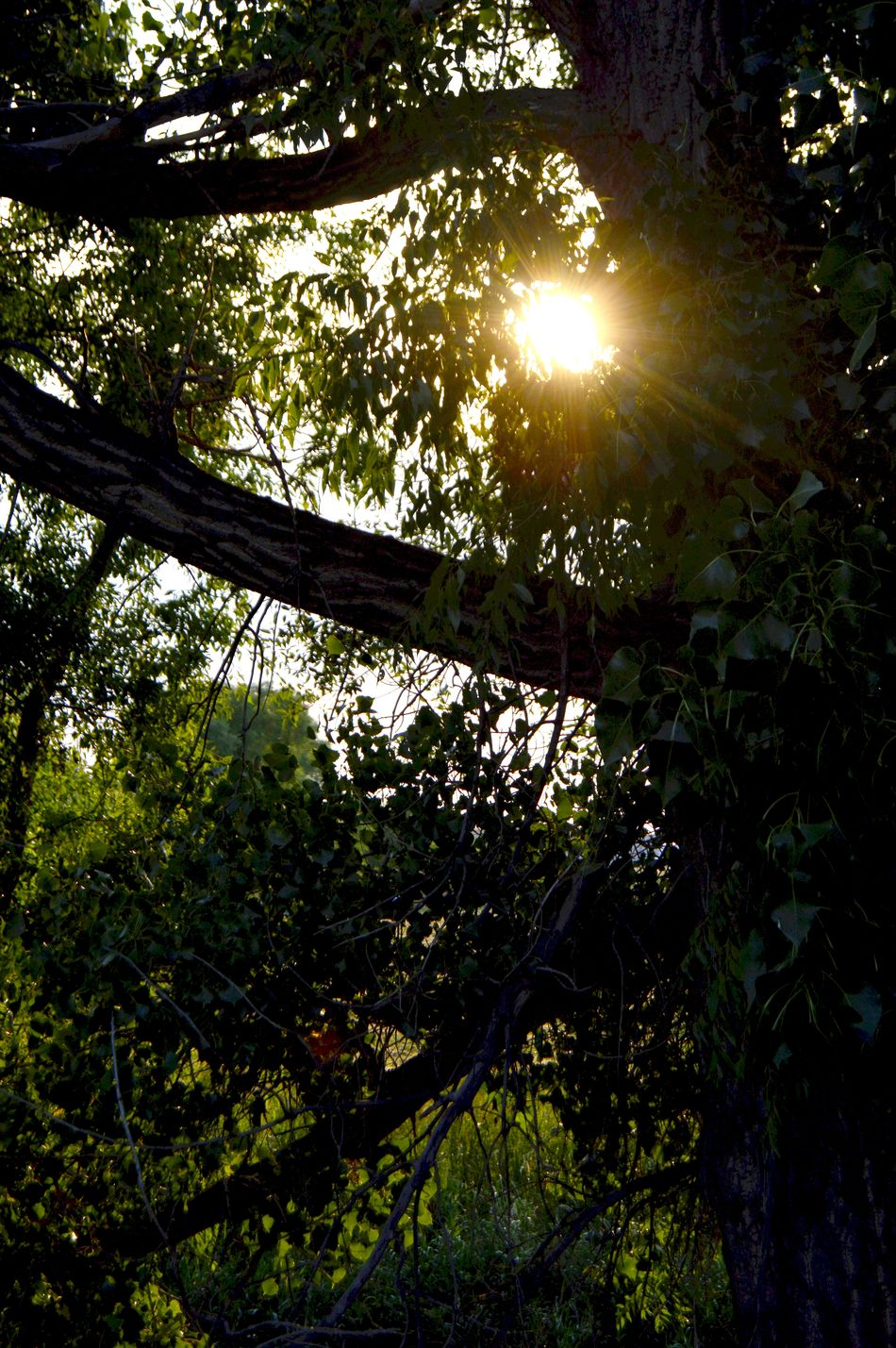 Sun shining through August Afternoon Beauty In Nature East Of Wyoming Women's Center Lusk Wyoming Green Color Grove Of Tree Along The Tracks Hot Summer Day Lush Foliage Trees Are Still Green