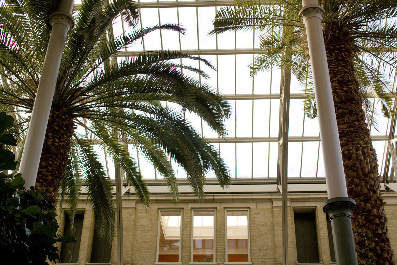 palm tree, growth, architectural column, architecture, tree, day, no people, outdoors, sky