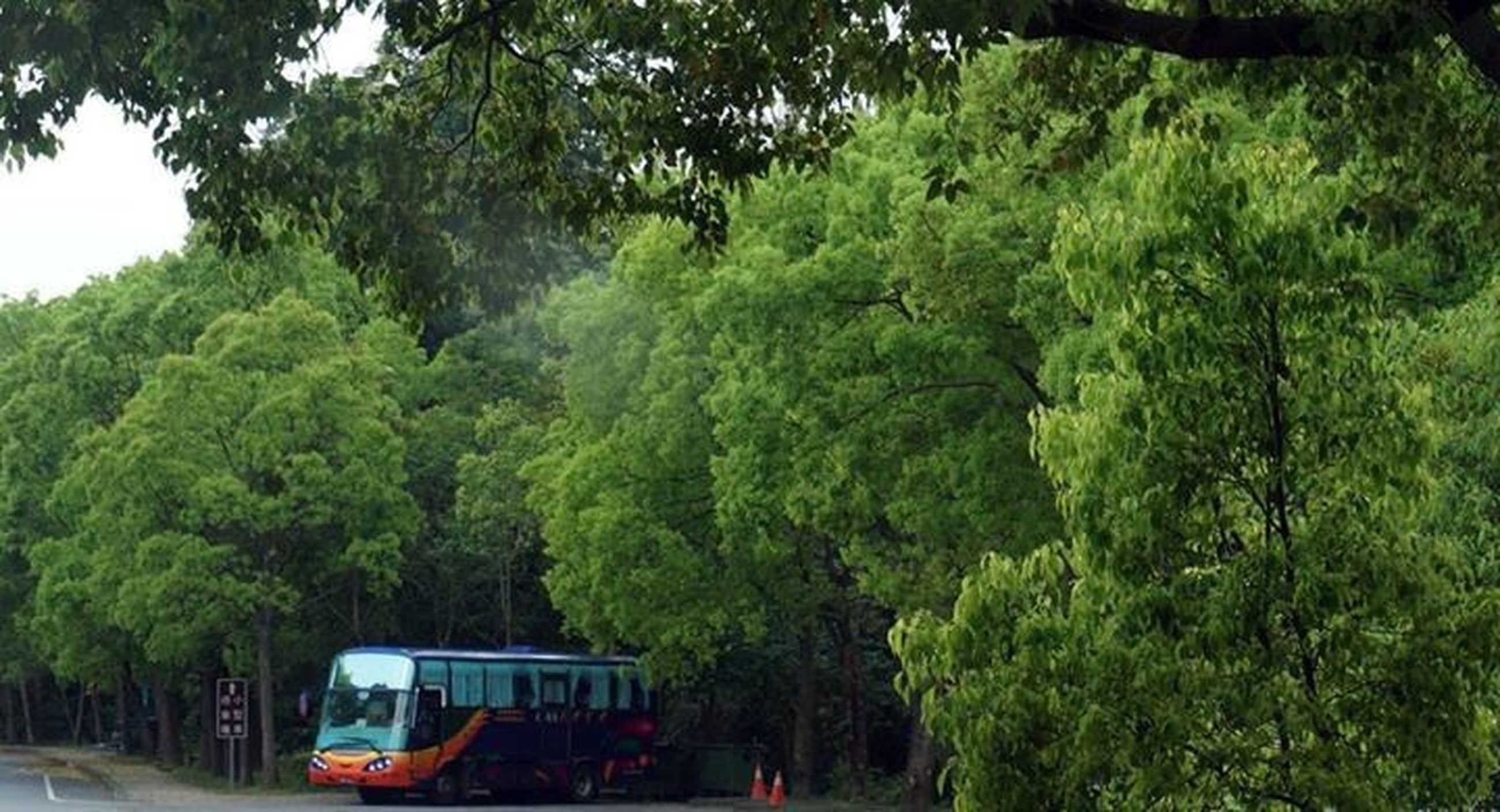 tree, transportation, mode of transport, land vehicle, car, green color, growth, road, nature, forest, travel, on the move, lush foliage, day, outdoors, tranquility, street, no people, beauty in nature, high angle view