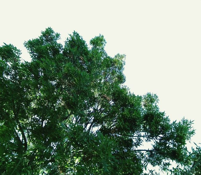 Tree Nature Low Angle View Green Color Growth Branch Outdoors No People Day Sky Beauty In Nature Close-up Grass Nature Green Luxury Low Section Elégance EyeEm Selects