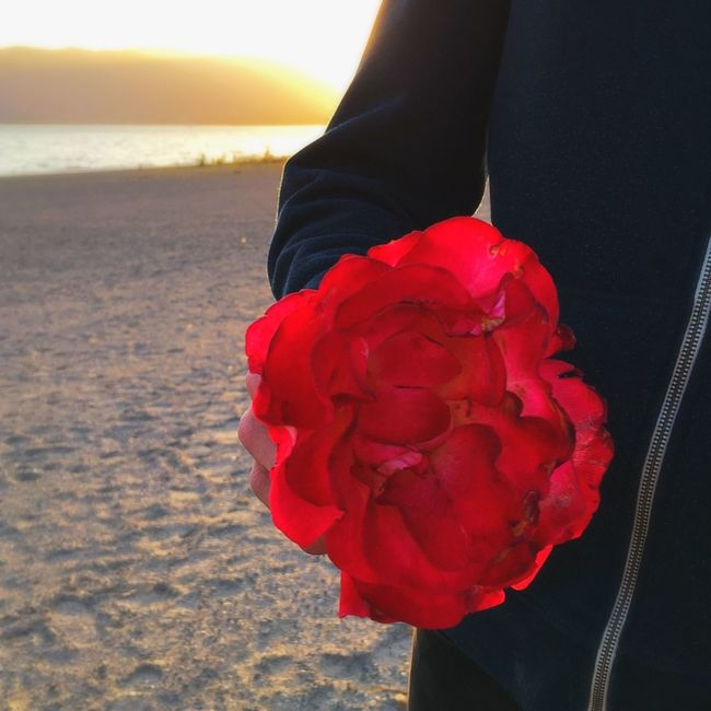 Before the going to the store, we stopped by the lake and he gave me a beautiful rose Alwayshandedflowers Beautiful Bythelake Love Red Rose Cute Sunset