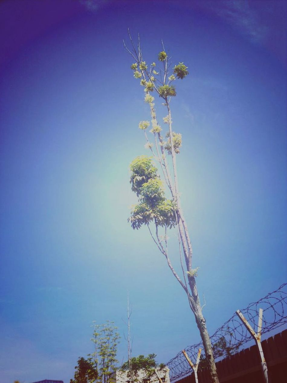 Blue Sky Big Tree EyeEm Gallery Sky Collection Phoneography Hanging Out Traveling EyeEm Nature Lover Nature_collection Tanjung Malim