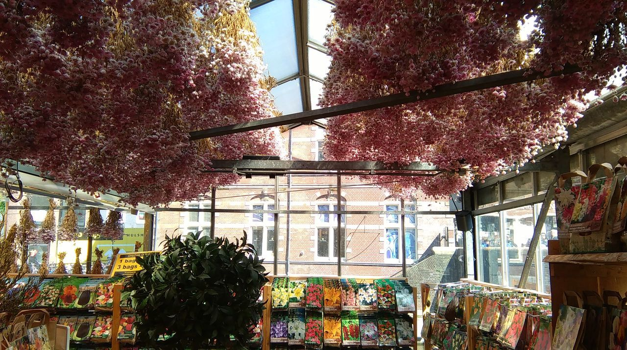 Amsterdam Bloemenmarkt Canalhouses Colorful Flowermarket Netherlands Traveling Tulips