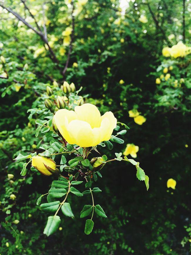 Urban Nature Flowers Littlejoys