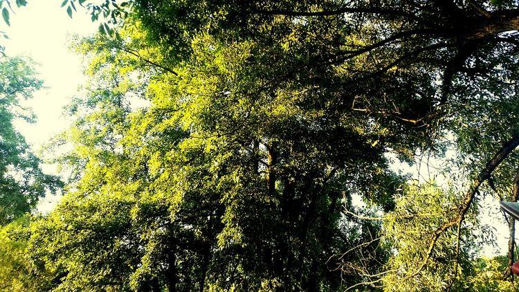 Nature tree, Sunshining