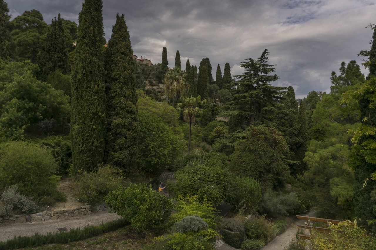 italia Beauty In Nature Botanical Gardens Botanischer Garten Costa Azzurra Côte D'Azur Day Forest Giardini Hanbury Giardino Italia Italie Italien Italy Italy❤️ Italy🇮🇹 Landscape Nature No People Outdoors Riviera Scenics Sky Social Issues Tree Ventimiglia