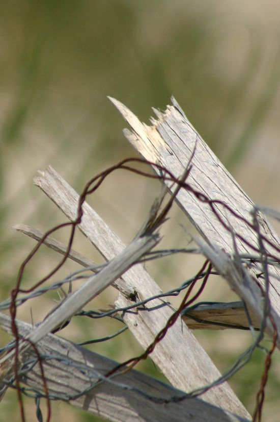 Broken Fence Close-up Focus On Foreground Grass Natural Pattern Outdoors Rusty Wire Selective Focus Sharp
