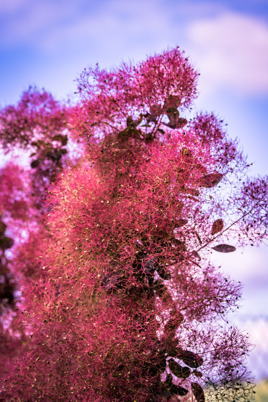 tree, growth, beauty in nature, nature, flower, fragility, no people, blossom, pink color, branch, springtime, day, sky, outdoors, close-up, low angle view, freshness