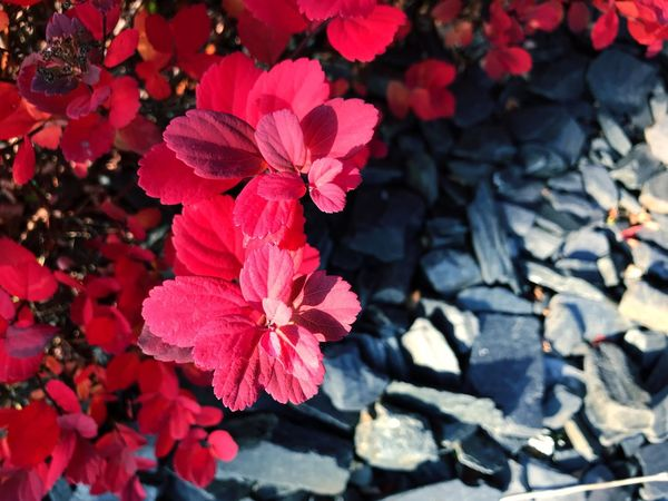Flower Nature Petal Beauty In Nature Outdoors Day Growth No People Sunlight Blooming Flower Head Fragility Freshness Close-up