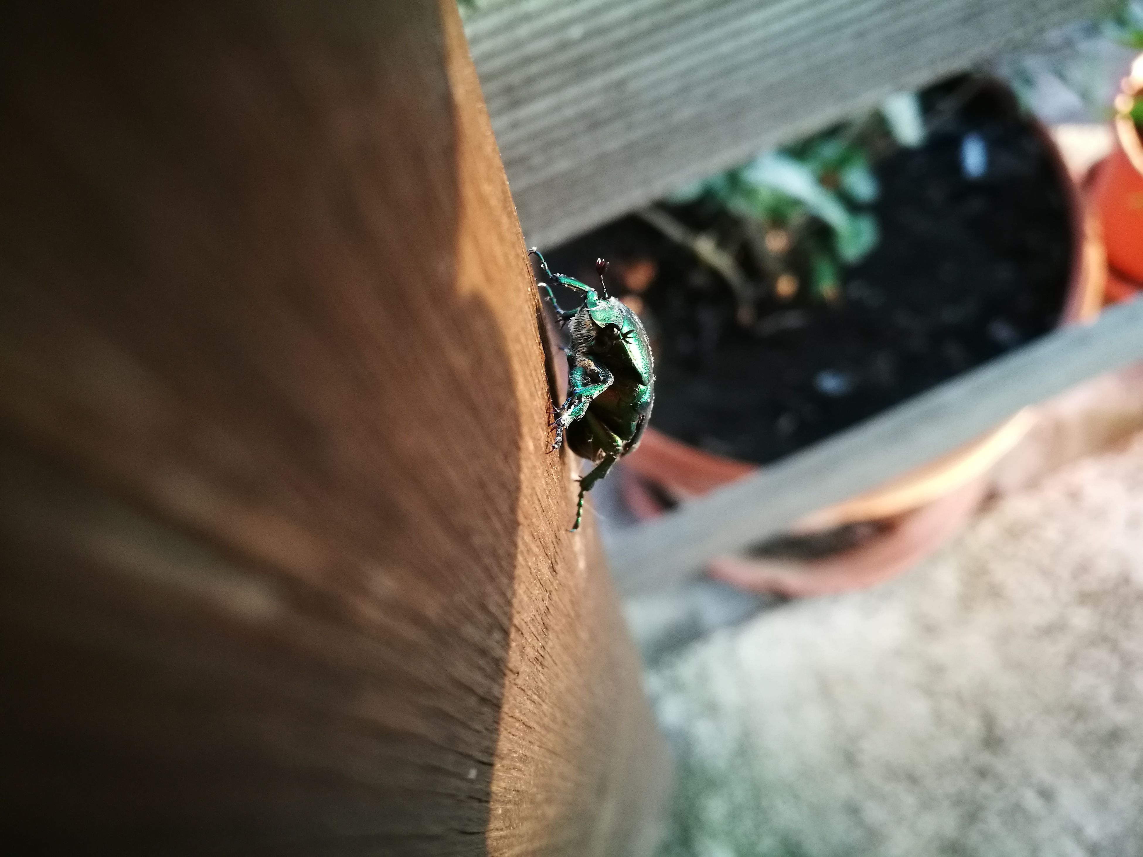 selective focus, insect, animal themes, one animal, concrete, wooden, day, no people, focus on foreground, green