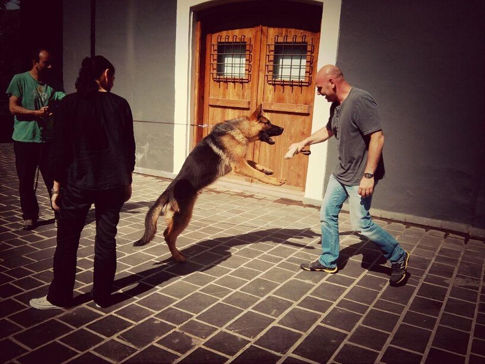 Today at Quantum Beautiful Animals Dogs Quantum Group
