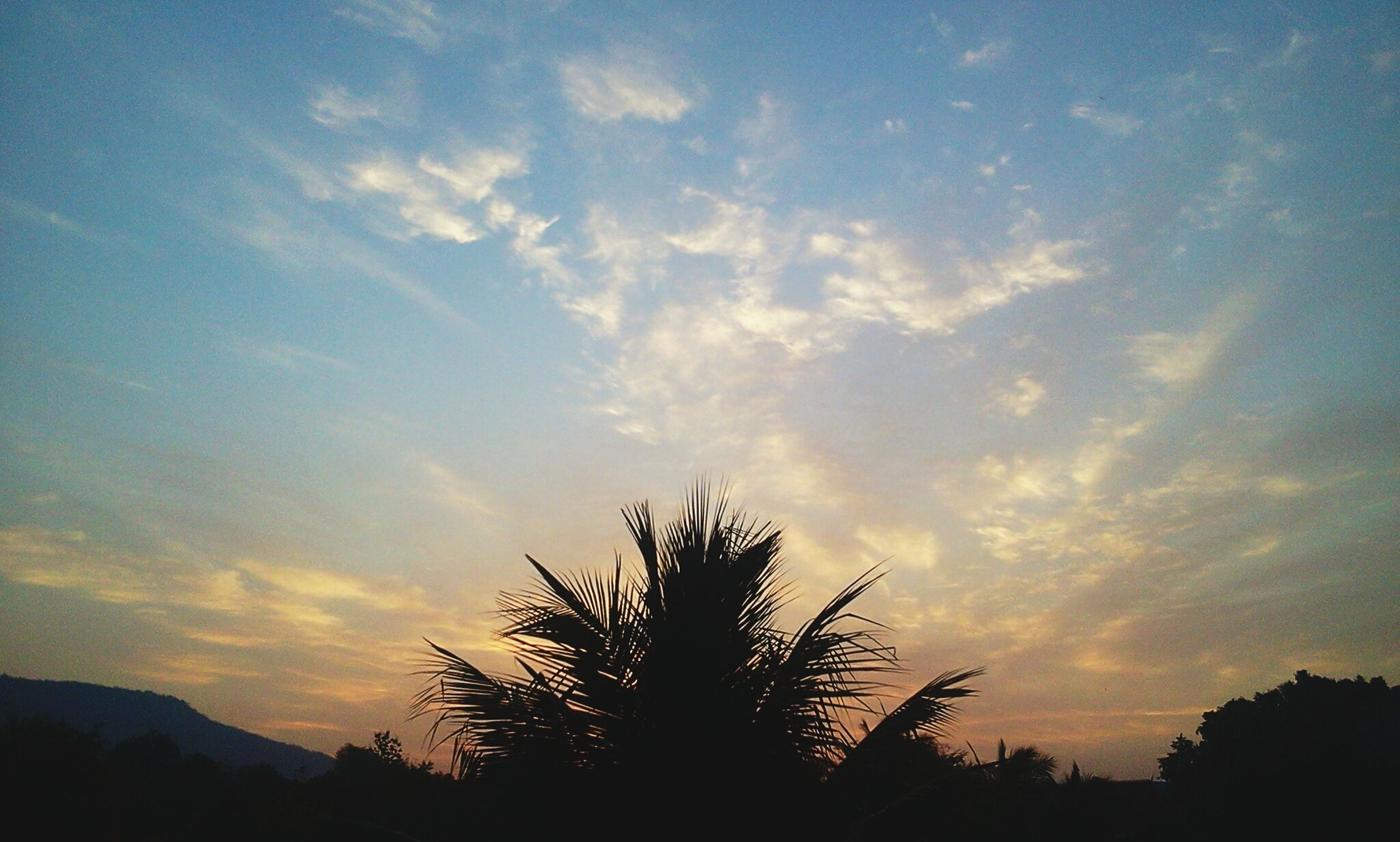 silhouette, sunset, sky, tranquility, tranquil scene, scenics, tree, beauty in nature, cloud - sky, nature, low angle view, idyllic, cloud, landscape, outdoors, outline, non-urban scene, orange color, non urban scene, no people