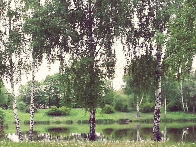Forest Brzoza Cudnie :-)