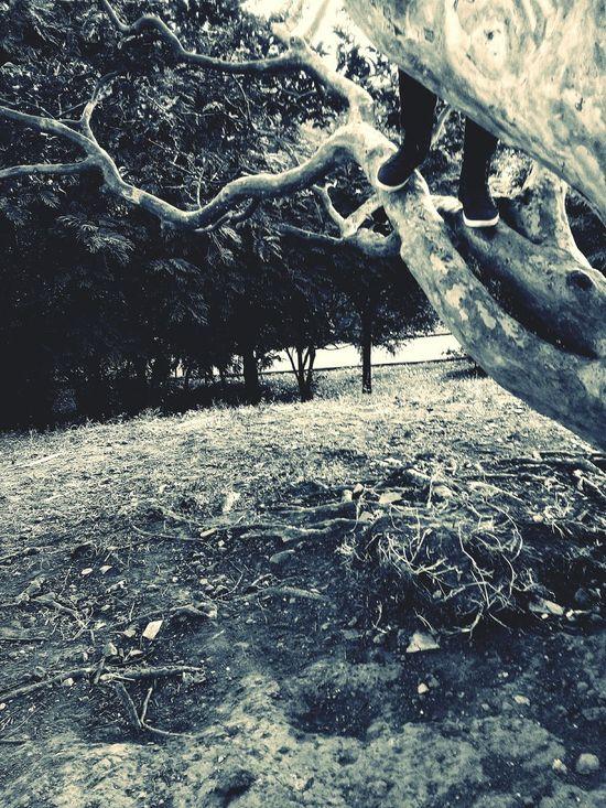 subiendo...Enjoying Nature Arboles Climbing Trees Tree Trunk Naturaleza Sibir Relaxing Time Feets Pies