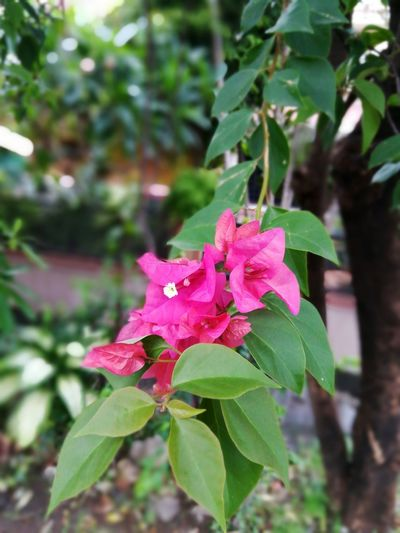 Flower Pink Color Leaf Fragility Nature Growth Petal No People Beauty In Nature Plant Green Color Flower Head Freshness Outdoors Day Close-up