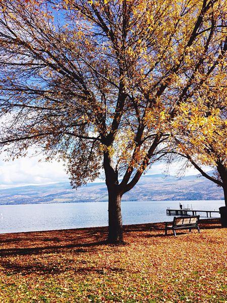 Fall Beauty EyeEm Nature Lover Fall Beach Lake Okanaganlake Okanagan Valley Autumn Autumn Leaves Autumn Colors Nature Nature_collection