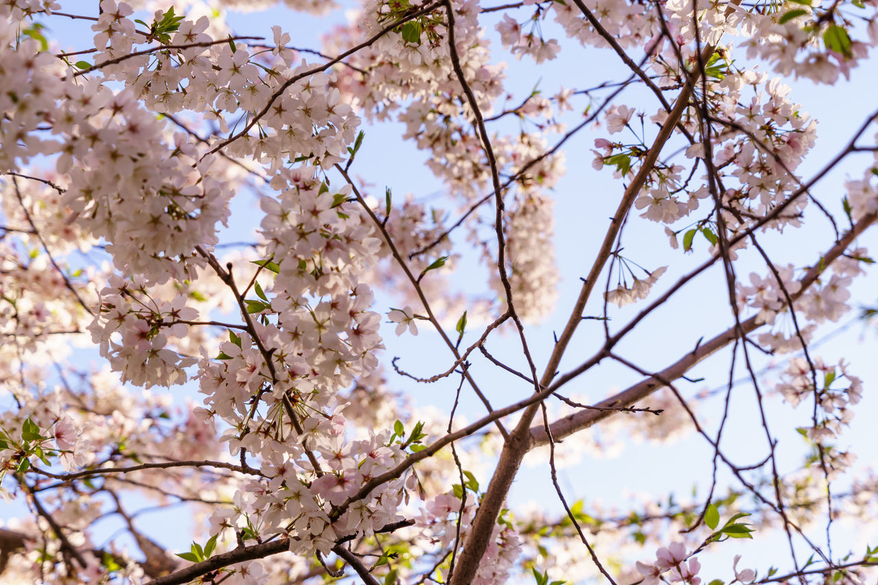 Beautiful stock photos of ostern, abundance, backgrounds, beauty in nature, blooming