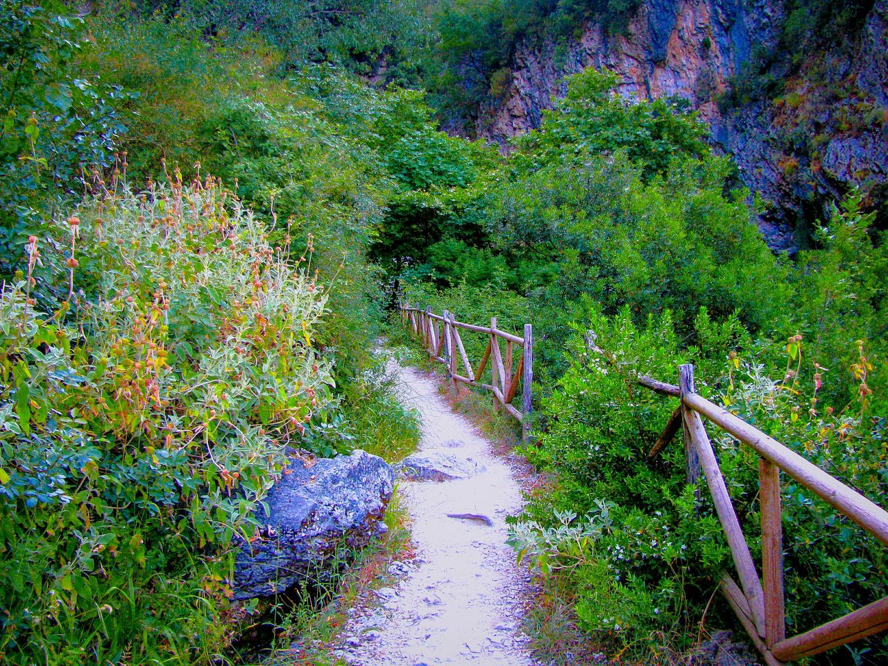Feel The Journey Path Pathway Path In Nature Going The Distance Hiking Forest Forestwalk Forest Path Evening Walk Greenery Trees Paths Pathways Lefkada Island Greek Islands The Great Outdoors - 2016 EyeEm Awards Nature On The Way Rock Rock Formation Rock And Trees Shades Of Green  Share Your Adventure Live For The Story The Great Outdoors - 2017 EyeEm Awards