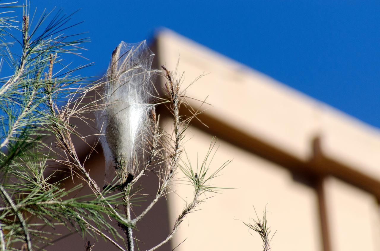 Nido de orugas en un arbol 2015  Close-up Day Eddl Focus On Foreground Nature No People Outdoors Plant Sky Sunlight Zaragoza