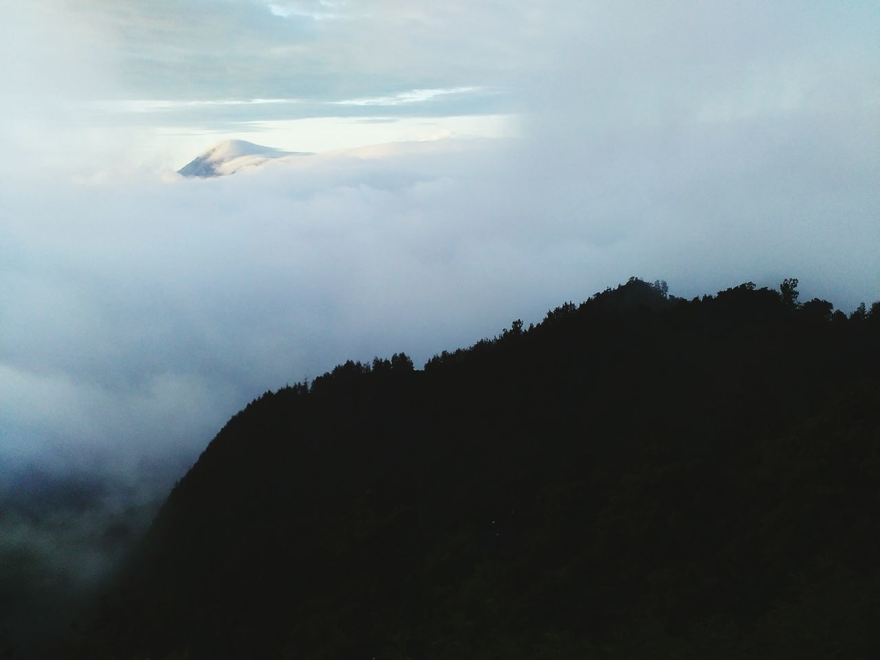 Above the cloud Landscape Sky Mountain Atmospheric Mood Tree Beauty In Nature Forest Cloud - Sky Nature Fog Wonderfulindonesia